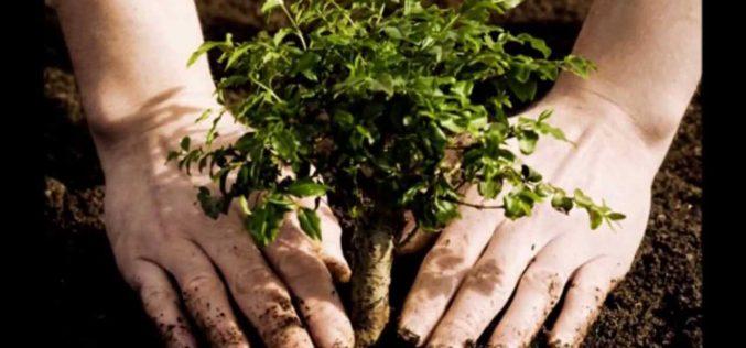 Achetez une voiture, plantez un arbre