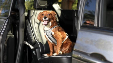 Chrysler brand is marking National Pet Day on April 11 by calling out the top five pet-friendly features of the redesigned 2021 Chrysler Pacifica.
